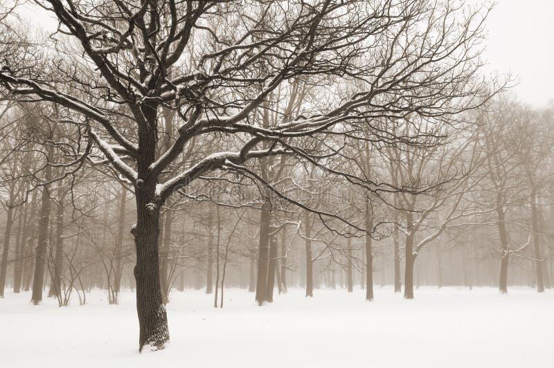 横向有薄雾的结构树冬天 免版税库存照片