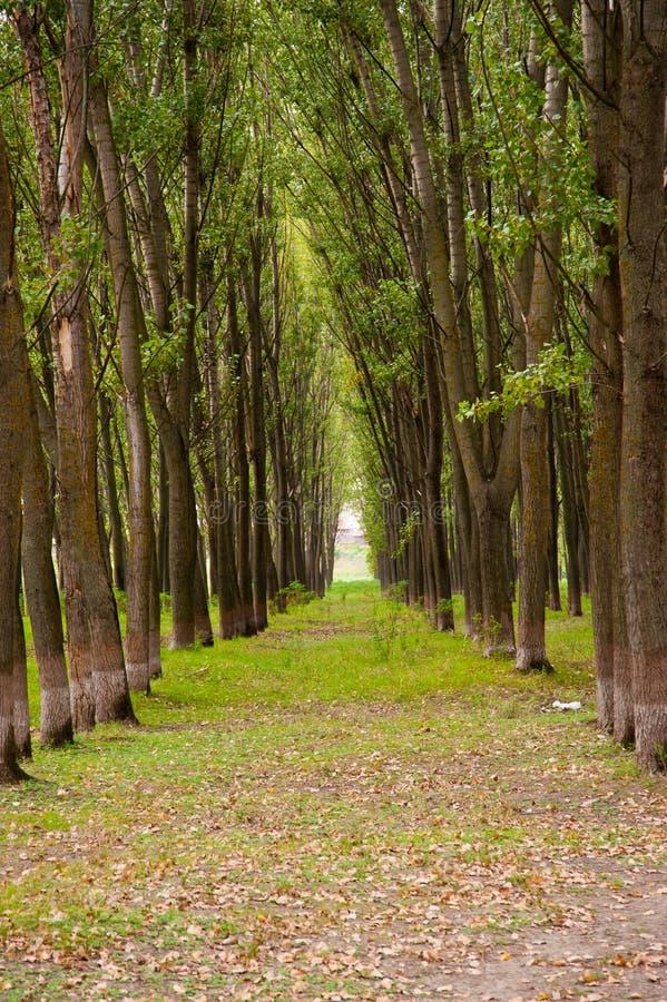 横向线路夏天结构树 免版税库存照片