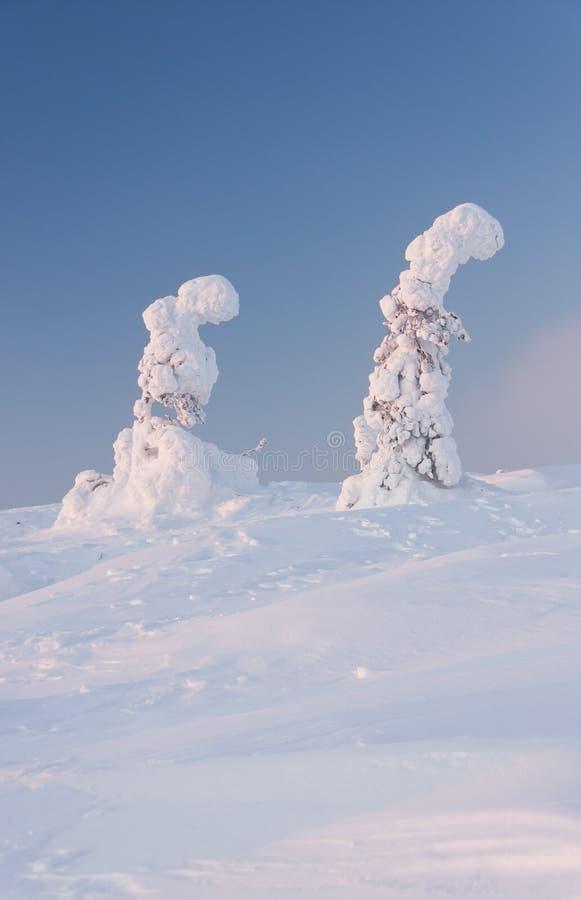 横向结构树冬天 免版税库存照片