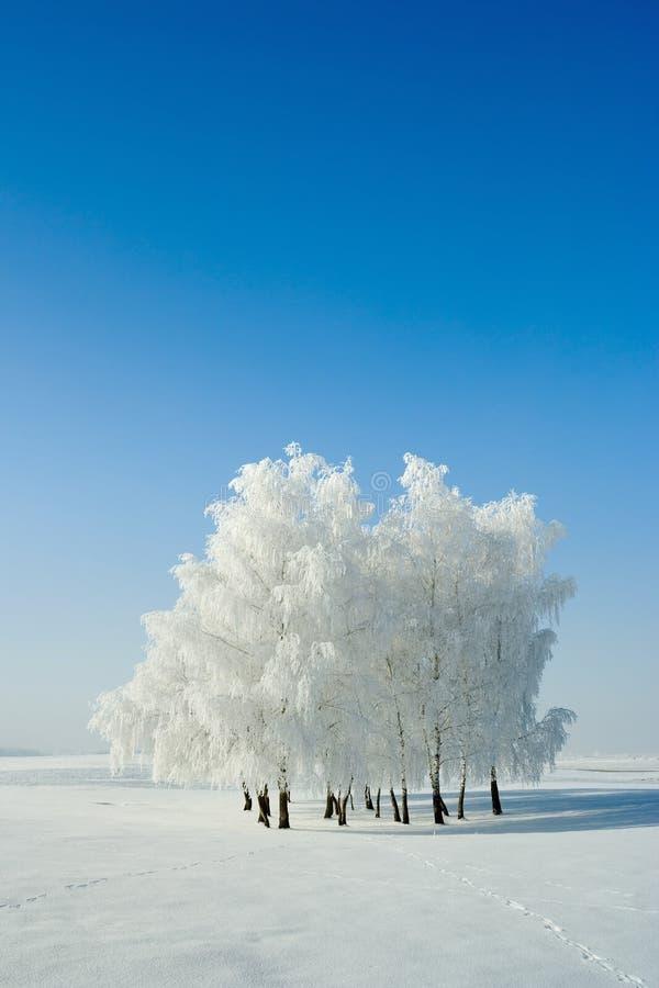 横向结构树冬天 库存照片