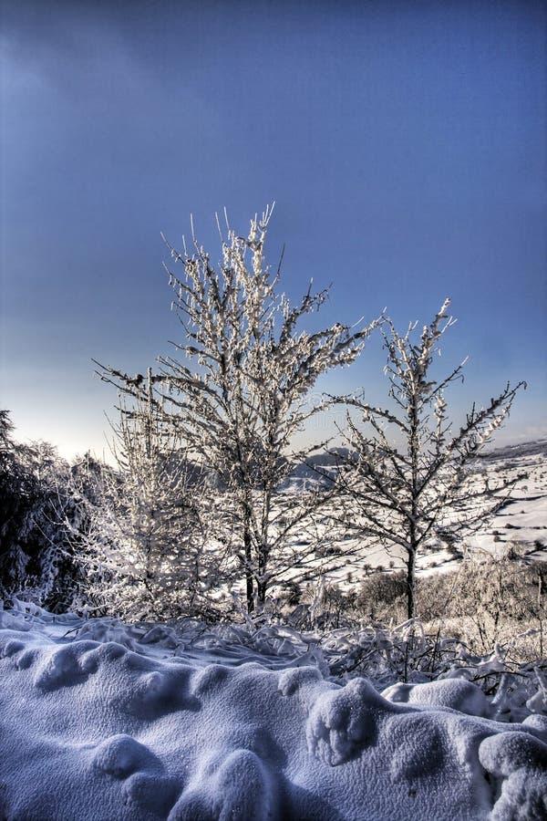横向结构树冬天 图库摄影