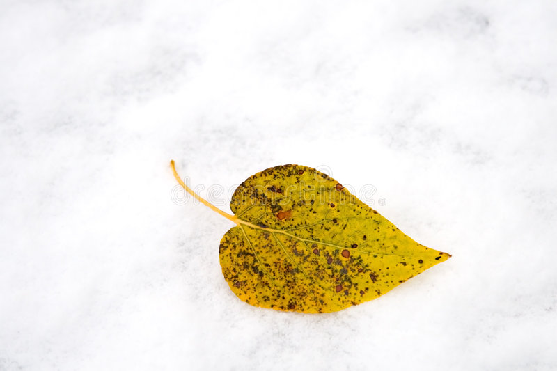 横向雪冬天 图库摄影