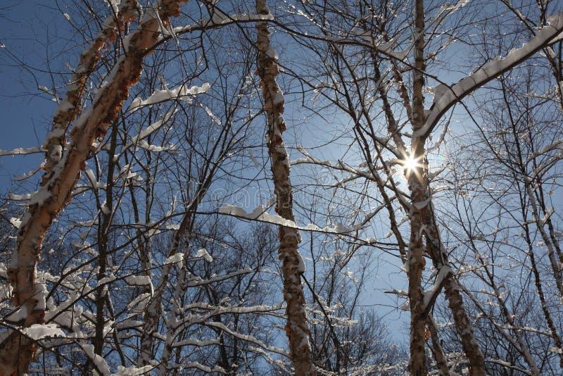横向雪风暴冬天 免版税库存图片