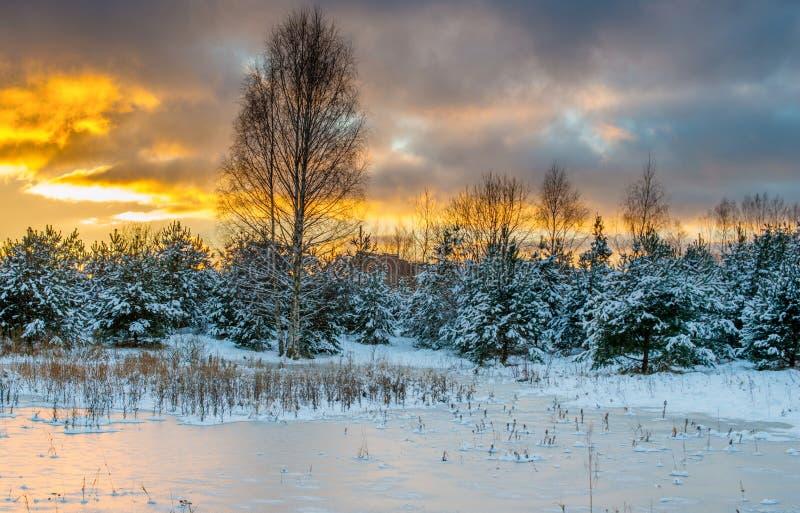 横向风景冬天 库存照片