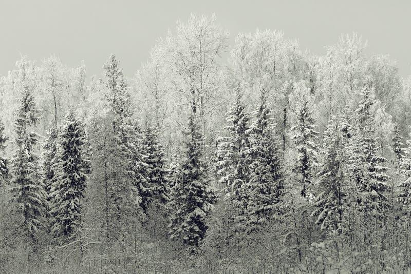 横向黑白照片冬天 库存照片