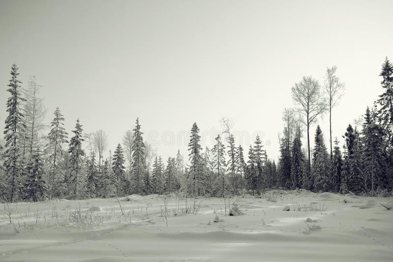 横向黑白照片冬天 免版税库存照片