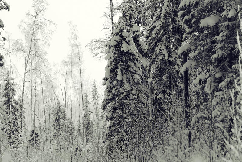 横向黑白照片冬天 免版税图库摄影