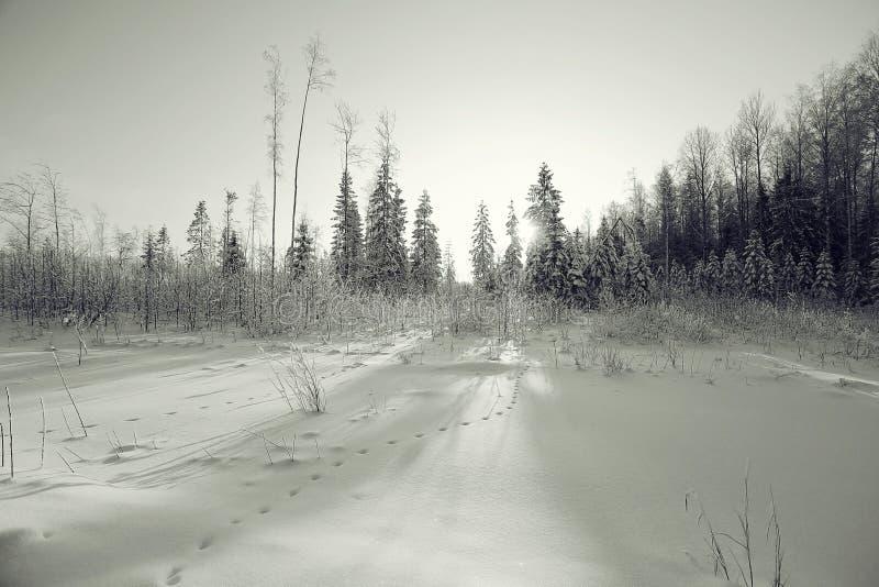 横向黑白照片冬天 库存图片