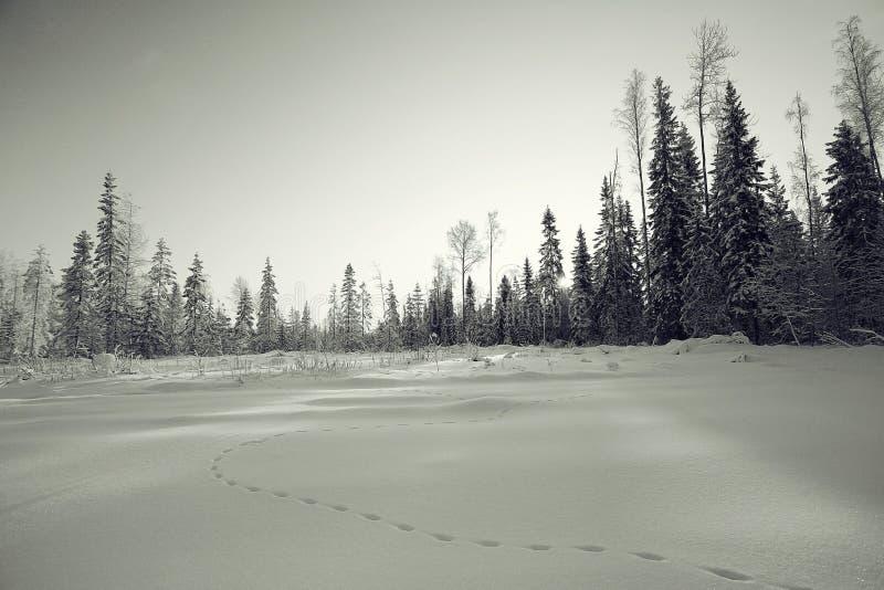 横向黑白照片冬天 免版税库存图片