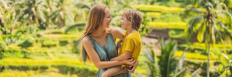 横幅、长的格式妈妈和儿子米领域的在米大阳台背景,Ubud,巴厘岛,印度尼西亚中 ?? 库存照片