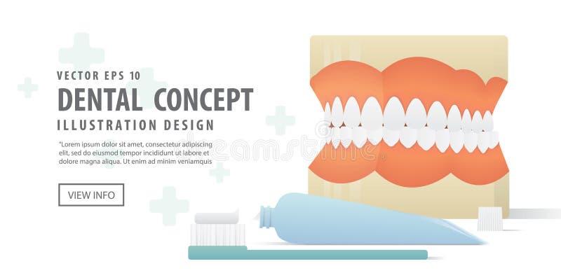 横幅假牙模型和牙刷和牙膏 皇族释放例证