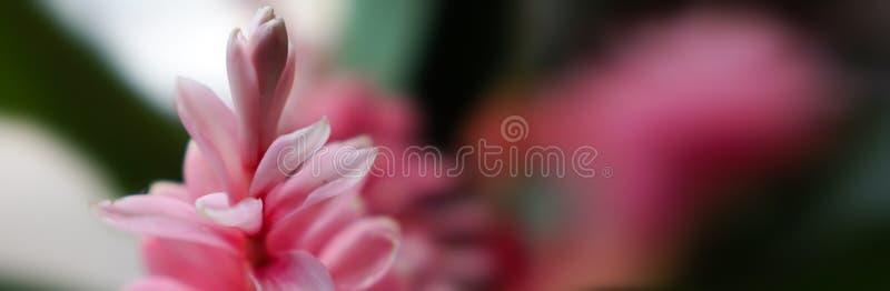 横幅大小花纹花样背景 库存照片