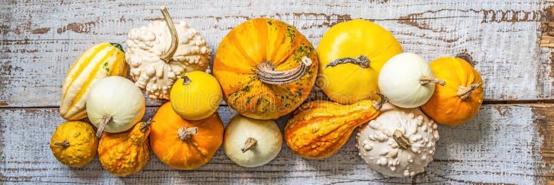横幅愉快的感恩 各种各样的南瓜的选择在老白色木背景的 秋天菜和季节性装饰 免版税库存图片