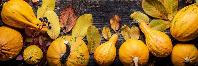 横幅愉快的感恩 各种各样的南瓜的选择在黑暗的木背景的 秋天菜和季节性装饰 图库摄影