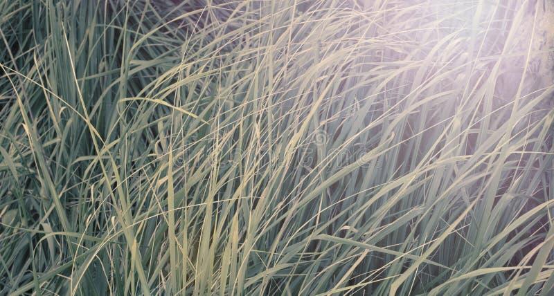 横幅自然本底草纹理颜色紫外 免版税库存照片