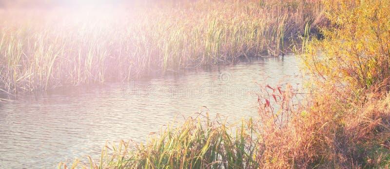横幅自然秋天风景河岸干草用茅草盖水自然选择聚焦被弄脏的背景 免版税库存图片