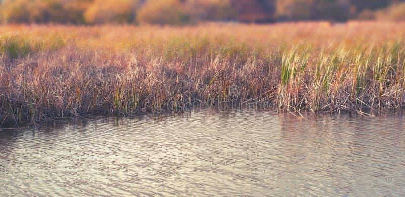 横幅自然秋天风景河岸干草用茅草盖水自然选择聚焦被弄脏的背景 免版税库存照片