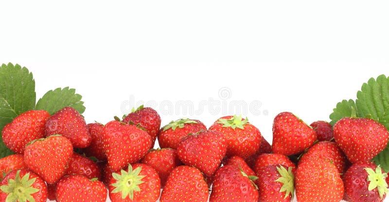 横幅草莓 免版税库存照片