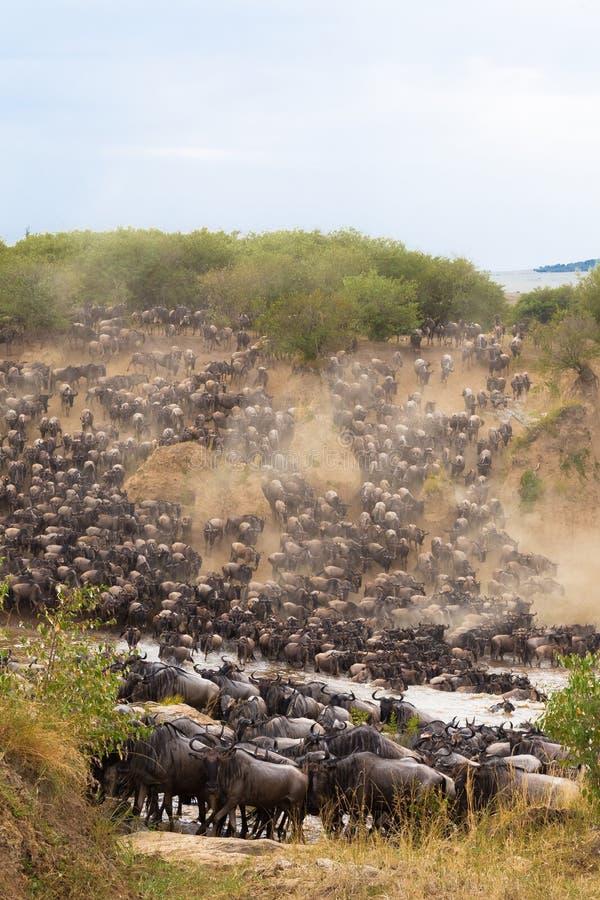 横渡对玛拉河的另一边 mara马塞语 免版税图库摄影