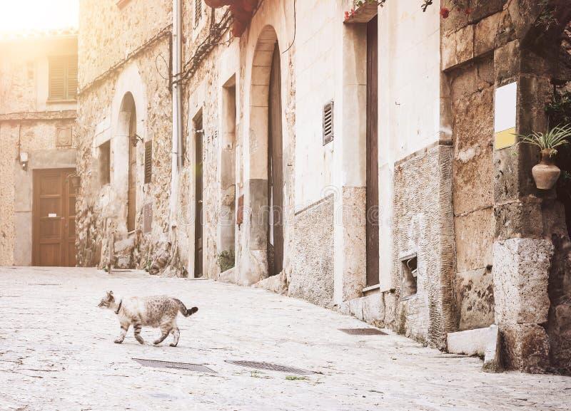 横渡空的胡同的猫在Valldemossa历史的老镇,马略卡 库存图片