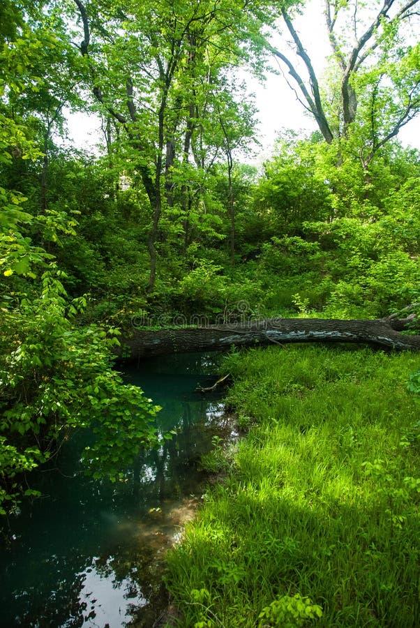 横跨一条小小河的下落的树 库存图片