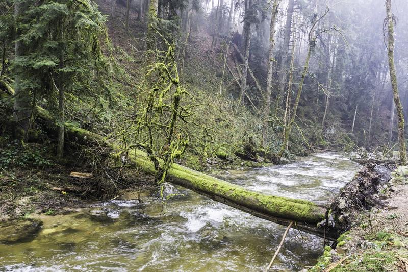 横跨一条河的下落的树在森林 图库摄影