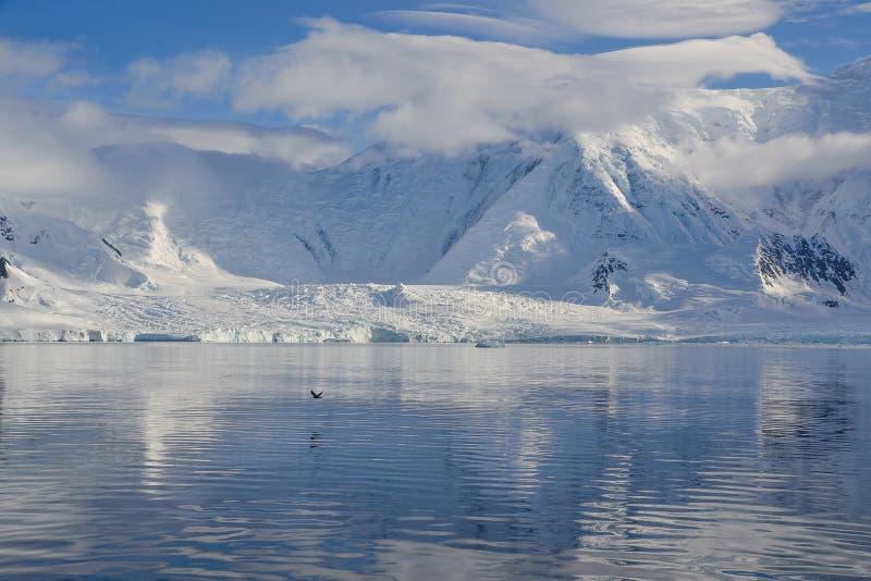 横跨南极水的鸟飞行 免版税图库摄影