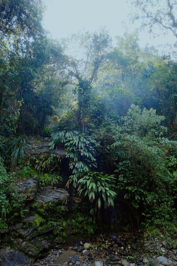 横跨密林道路的小狭窄的足迹在一片原始森林里 图库摄影