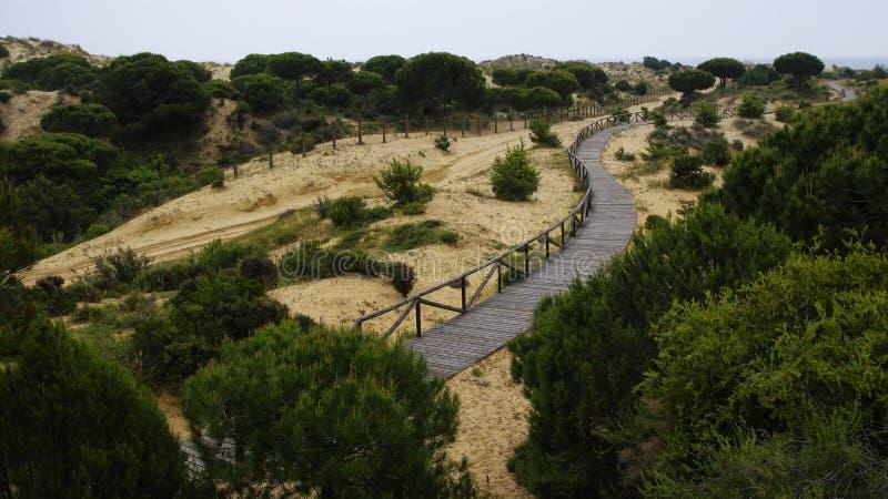 横跨沙丘在Matalascanas附近,省韦尔瓦省的一条绞的木木板走道 免版税库存照片