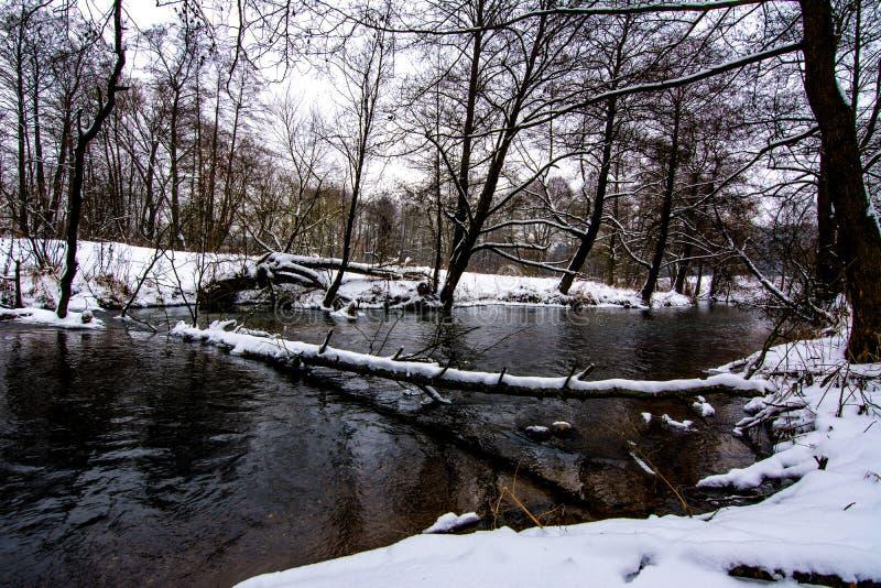 横跨河下落的冬天树 库存照片