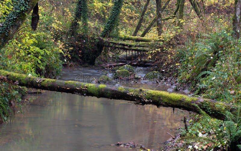 横跨河的下落的日志秋天 库存照片