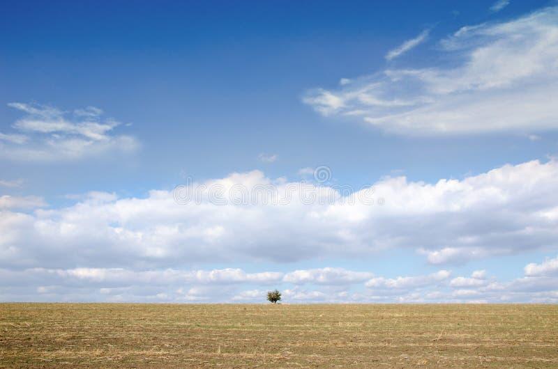 横跨被清除的领域的孤立树 免版税库存图片