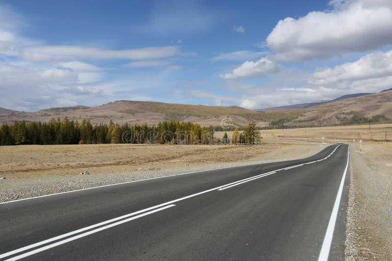 横跨阿尔泰的干草原的路 免版税库存照片