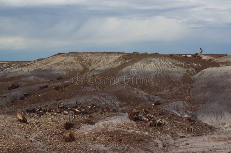 横跨风景驱散的木石化日志,化石森林国家公园,亚利桑那,美国 免版税图库摄影