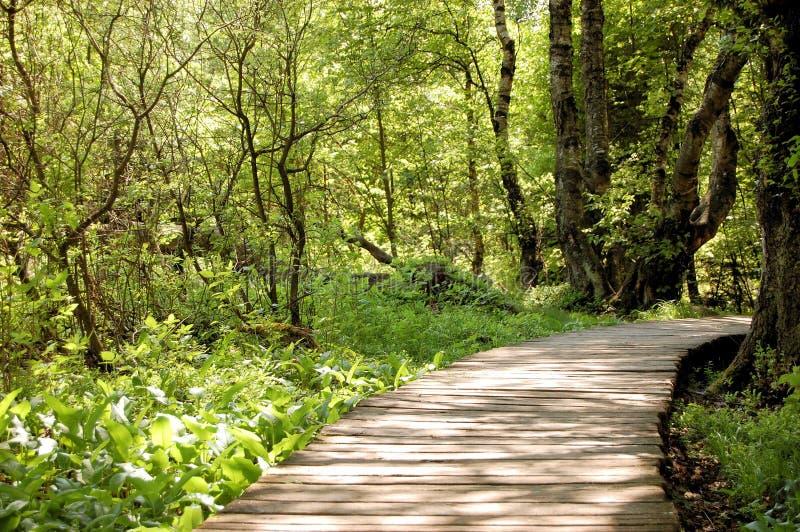 横跨swampland, Rhoen山脉的木板走道 免版税库存图片