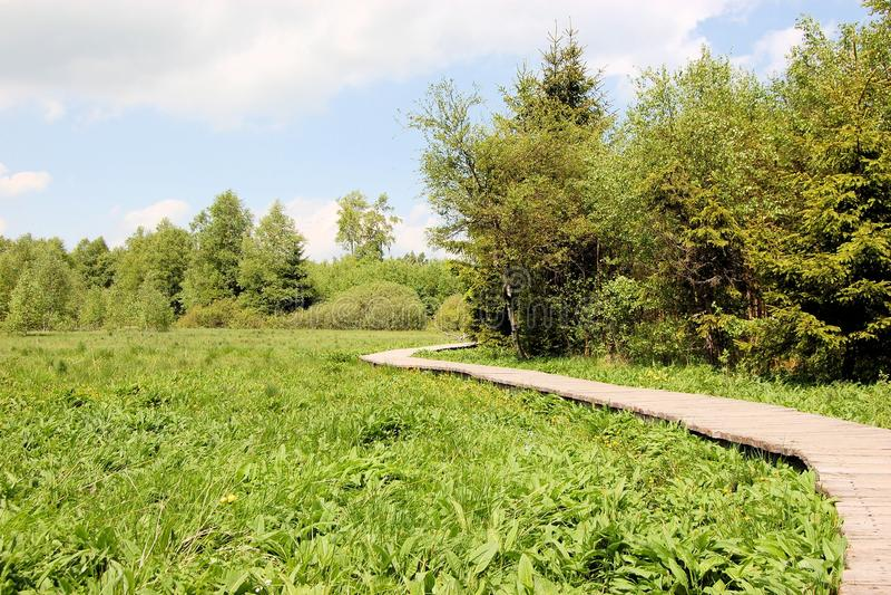 横跨swampland, Rhoen山脉的木板走道 库存图片