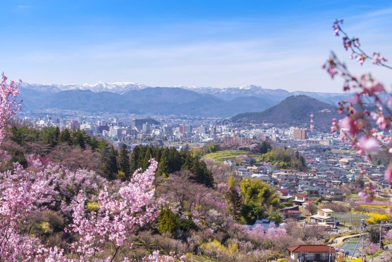 樱桃开花树& x28; Sakura& x29;并且许多花在河南市 库存图片
