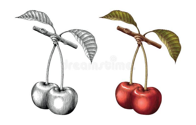 樱桃手图画葡萄酒板刻例证黑色和whi 向量例证