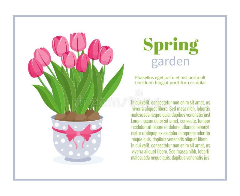 樱桃接近的花园红色春天郁金香上升白色 花小册子设计背景、横幅传染媒介模板或名片 春天植物郁金香 库存例证