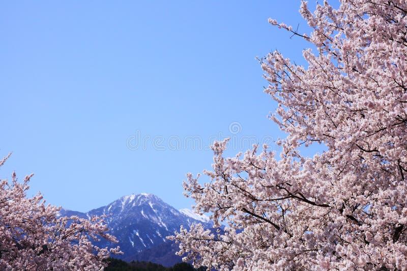 Download 樱桃树和山 库存照片. 图片 包括有 峰顶, 生气勃勃, 环境, 开花的, 花卉, 樱桃, 横向, 修改 - 30330950