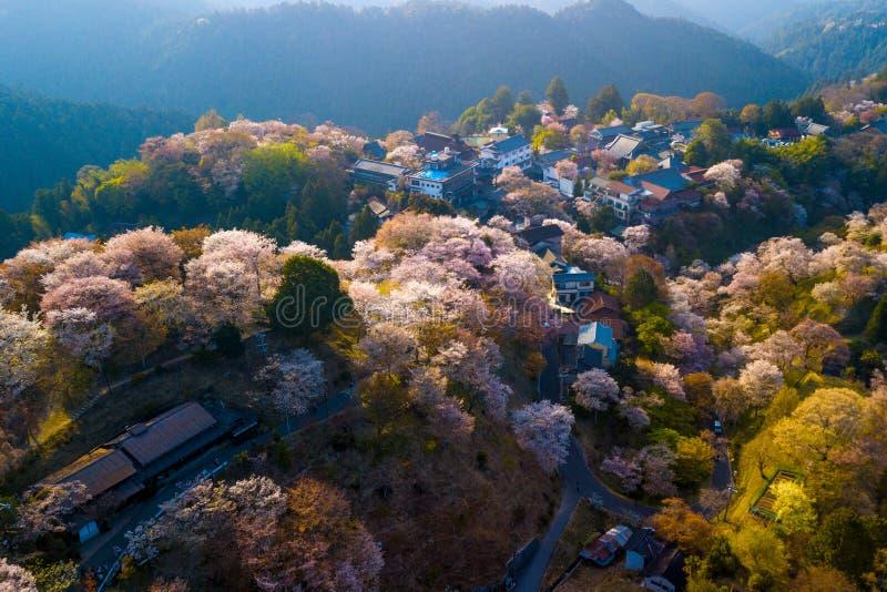 樱桃树开花风景 图库摄影