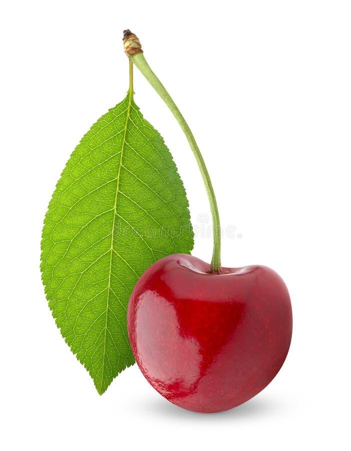 樱桃甜点 免版税库存图片