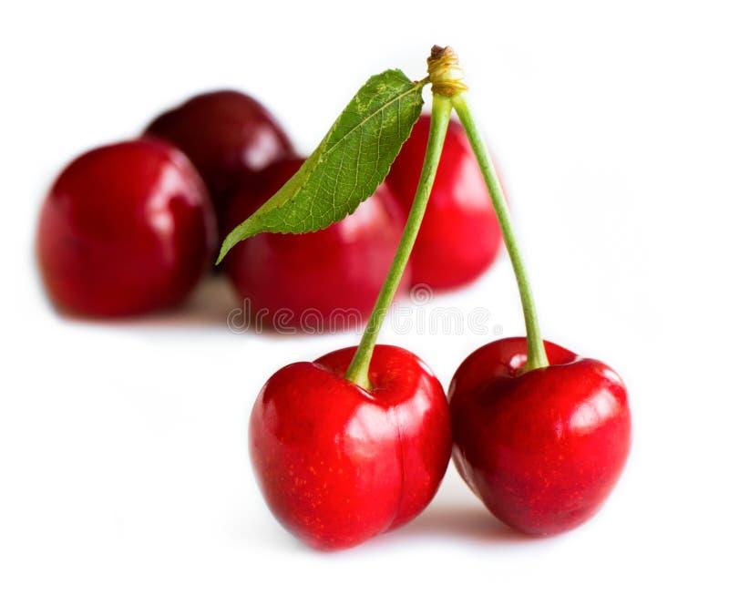 樱桃甜白色 库存图片