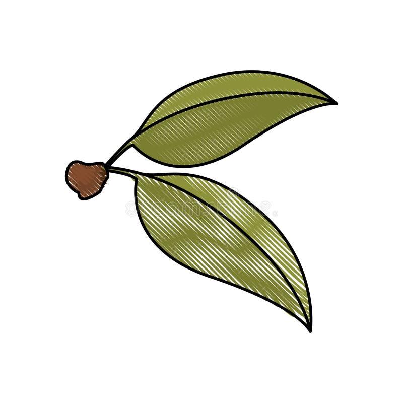 樱桃绿色叶子色的蜡笔剪影白色背景与词根的 皇族释放例证