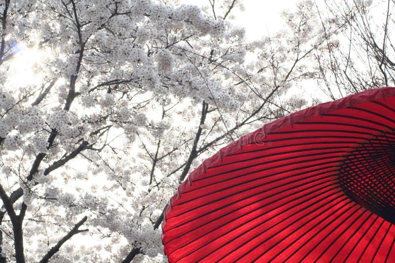 樱桃节日京都红色 免版税库存照片