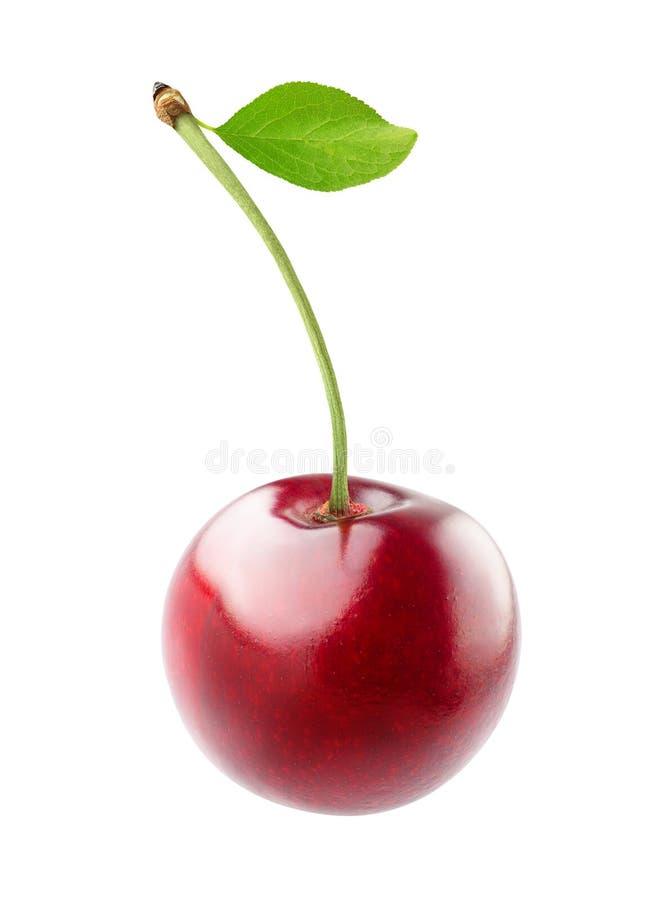 樱桃隔离甜白色 免版税图库摄影