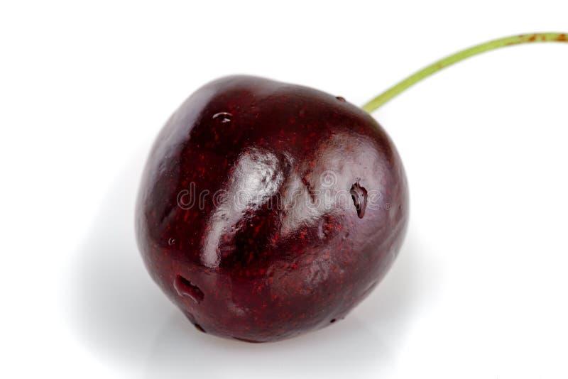 樱桃黑暗的褐紫红色 库存图片