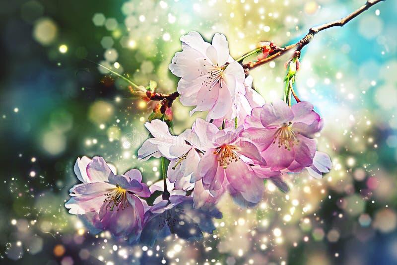 樱桃,苹果开花-春天花- Bokeh,透镜飘动,点燃 免版税库存照片