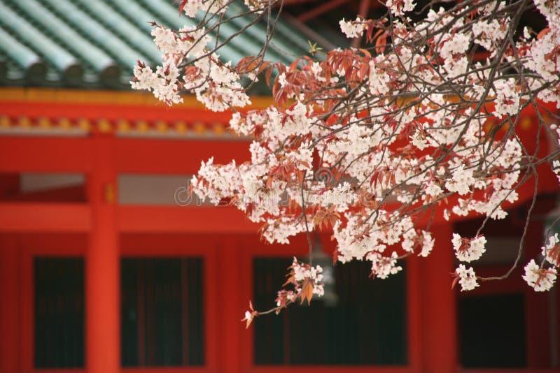 樱桃heian jingu寺庙结构树 免版税图库摄影