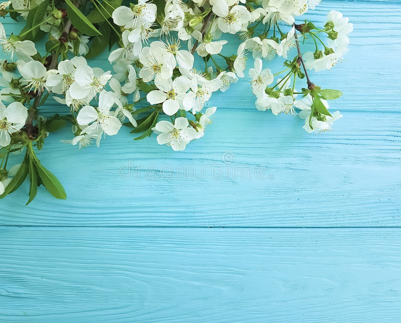 樱花分支卡片边界春季在蓝色木背景的装饰浪漫史 免版税库存照片